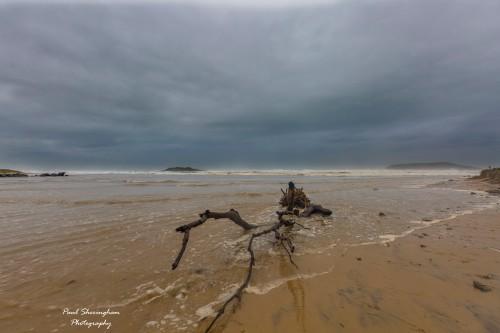 Dog_Beach_4.jpg
